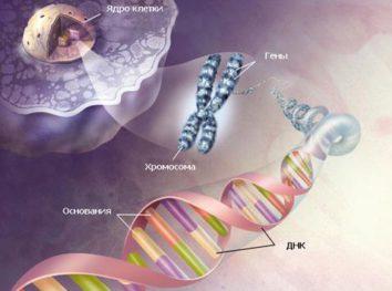 Биологические теории девиантности – 2