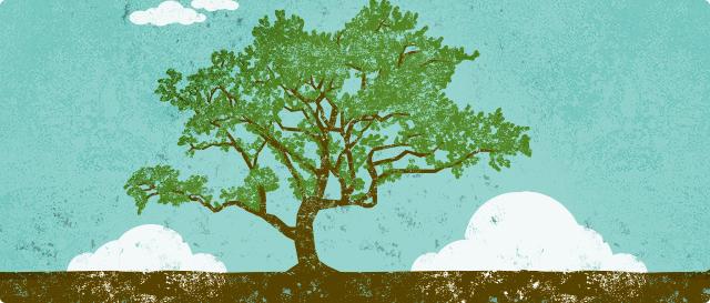 Дом - Дерево - Человек: Дерево
