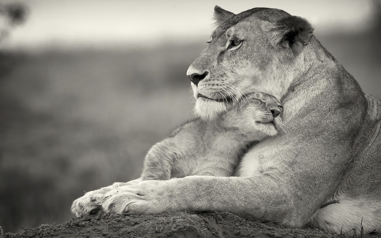 Семейные взаимоотношения